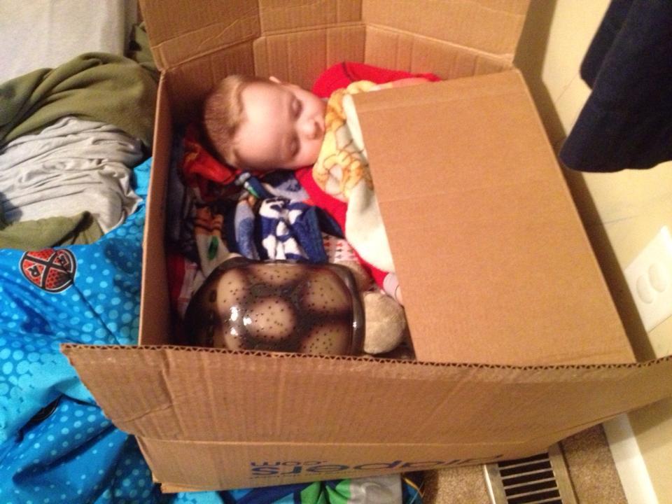 sleeping inside a box