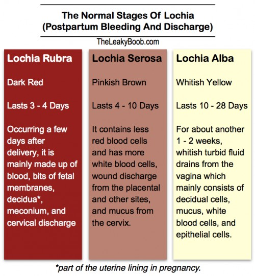 Normal Postpartum Bleeding and Discharge and the Return of Your Period  After Giving Birth